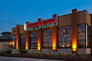 coopers-hawk2
